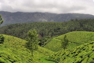 Kerala Honeymoon packages for 3 nights 4 days