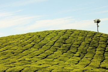 Kerala Honeymoon Packages for 2 nights 3 days